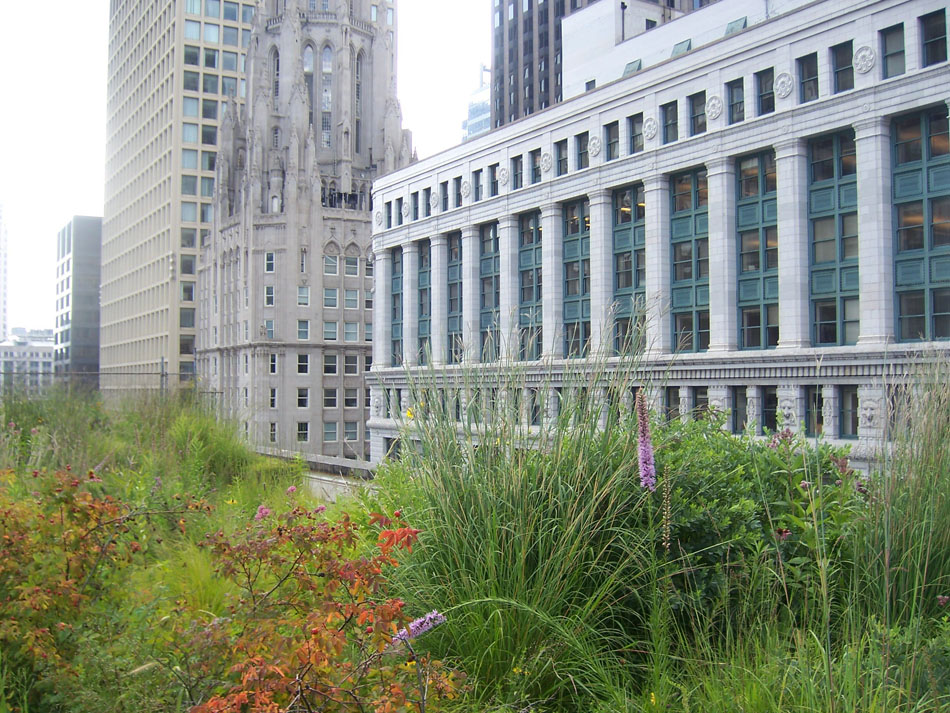 A green roof on Chicago's city hall