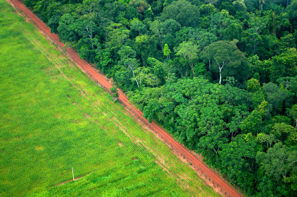 A stark line between rain forest and agricultural land in Brazil