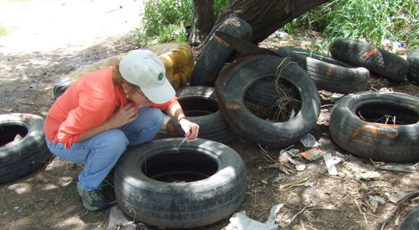 Scientist checks tires for mosquito breeding sites