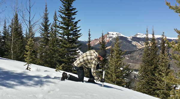 A technician conducts a snow survey in the Conejos River basin