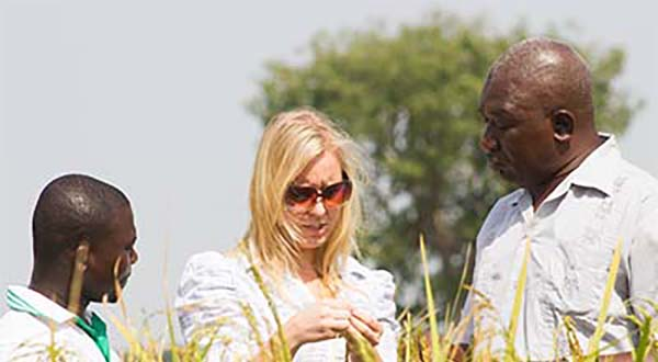 Ignitia chief executive and 2 farmers inspecting rice in northern Ghana