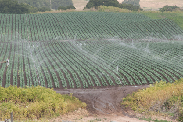 Irrigation of agricultural fields in California.