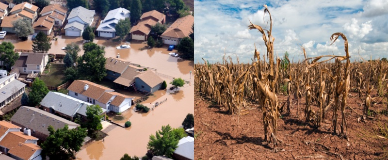 Collage of drought and flood