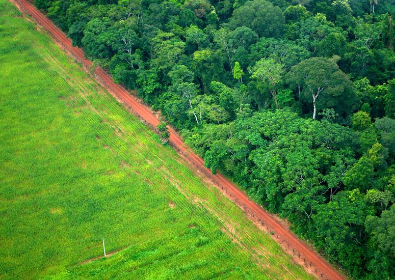 Global forests soaking up carbon at quickening rate