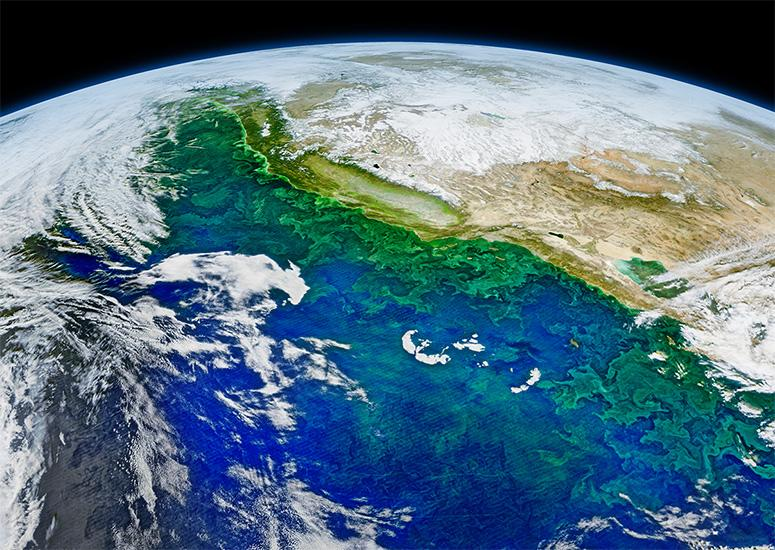 A composite image of blooming phytoplankton and swirling currents along the coast of California and western Mexico. (Credit: Norman Kuring / NASA)