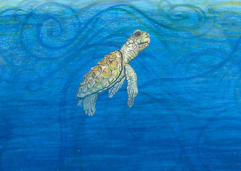 Oil painting of a juvenile loggerhead turtle by NCAR scientist and co-author Kristen Krumhardt
