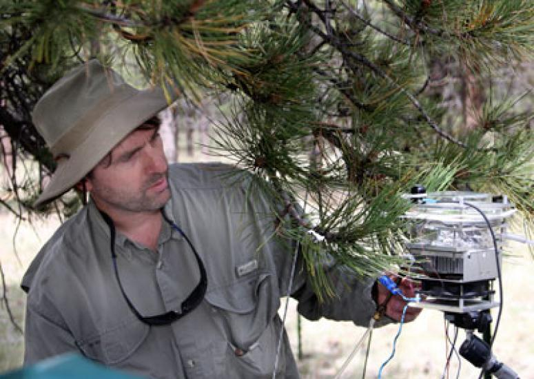 Photograph of Alex Guenther looking at an instrument attached to a pine tree