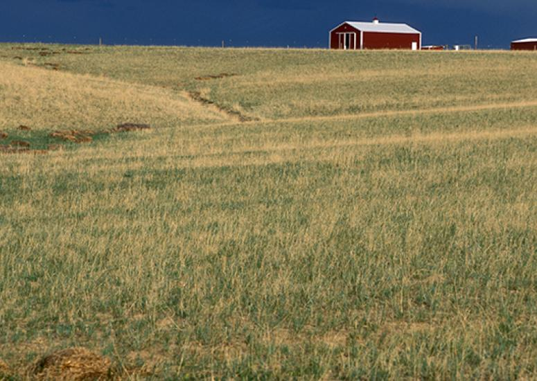 Photograph of a prairie with red barn in the distance, blue sky