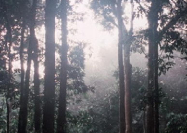 Rainforest in Congo