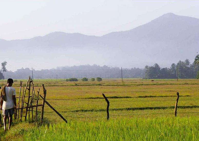 UCAR, India join forces for research. Photo: A farm in India, misty hills in background