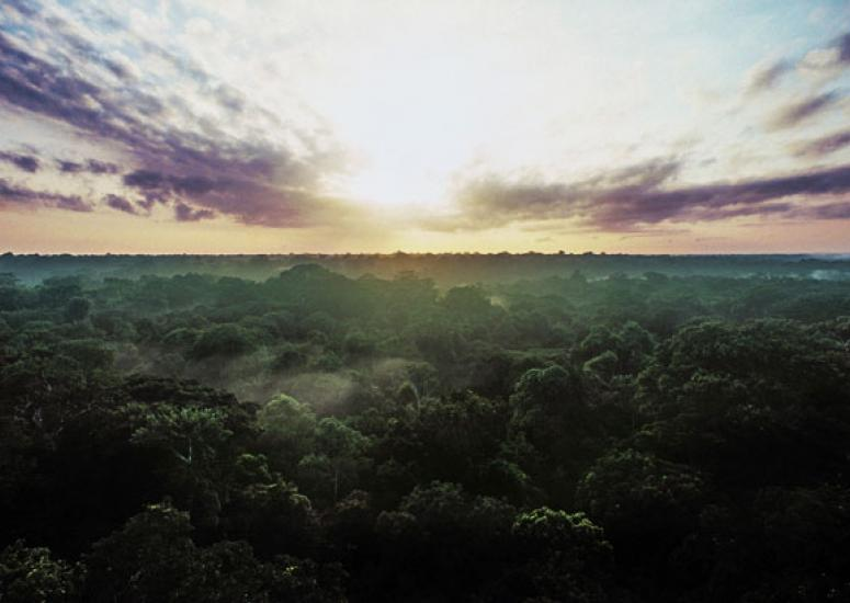 Climate and tropical forests: photo of tropical rainforest