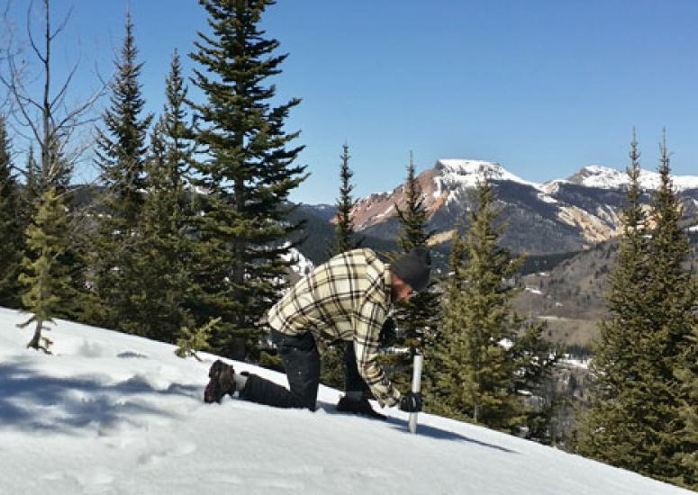 Forecasting water supply: A technician conducts a snow survey in the Conejos River basin