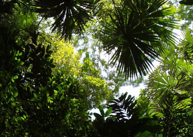 Predicting plant uptake of carbon: photo of trees and ferns in Costa Rica