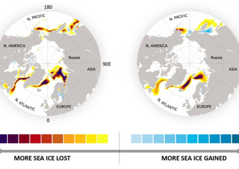 NCAR sea ice predictions: Images showing observed and predicted winter sea ice loss